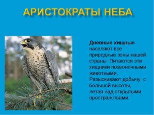 Дневные хищные населяют все природные зоны нашей страны. Питаются эти хищники