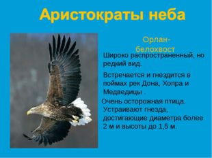 Орлан-белохвост Широко распространенный, но редкий вид. Встречается и гнездит