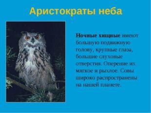 Ночные хищные имеют большую подвижную голову, крупные глаза, большие слуховые