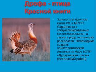 Занесена в Красные книги РФ и МСОП. Охраняется в специализированных госохотза