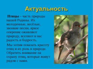 Птицы – часть природы нашей Родины. Их мелодичные, весёлые, звонкие песни, я