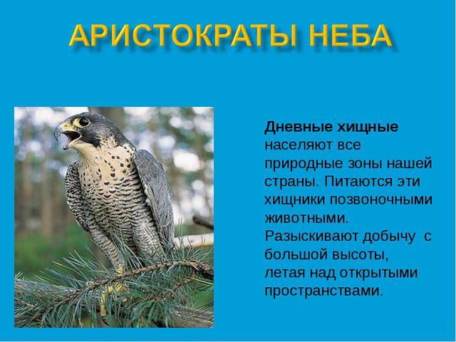 Дневные хищные населяют все природные зоны нашей страны. Питаются эти хищники...