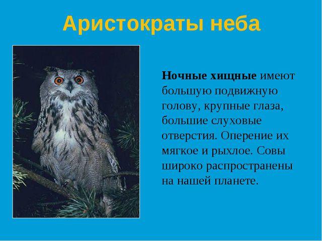 Ночные хищные имеют большую подвижную голову, крупные глаза, большие слуховые...
