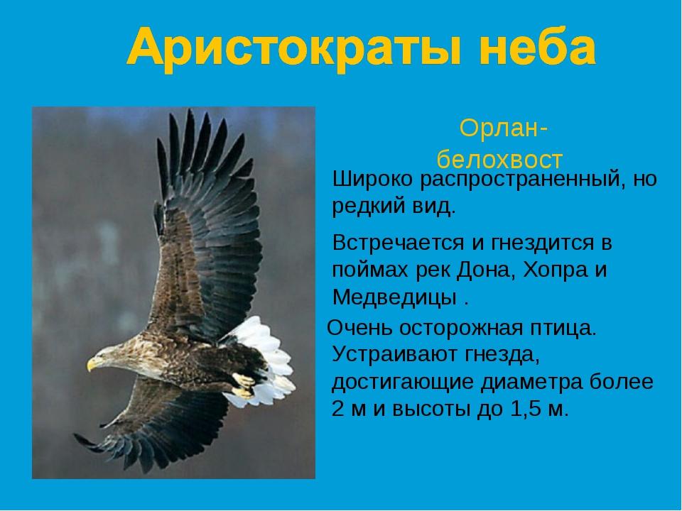 Орлан-белохвост Широко распространенный, но редкий вид. Встречается и гнездит...