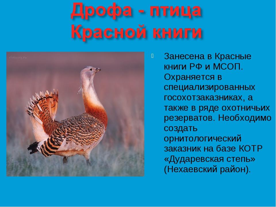 Занесена в Красные книги РФ и МСОП. Охраняется в специализированных госохотза...