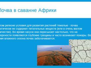 Почва в саванне Африки В этом регионе условия для развития растений тяжелые -