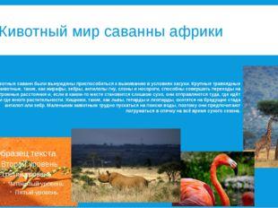 Животный мир саванны африки Животные саванн были вынуждены приспособиться к в