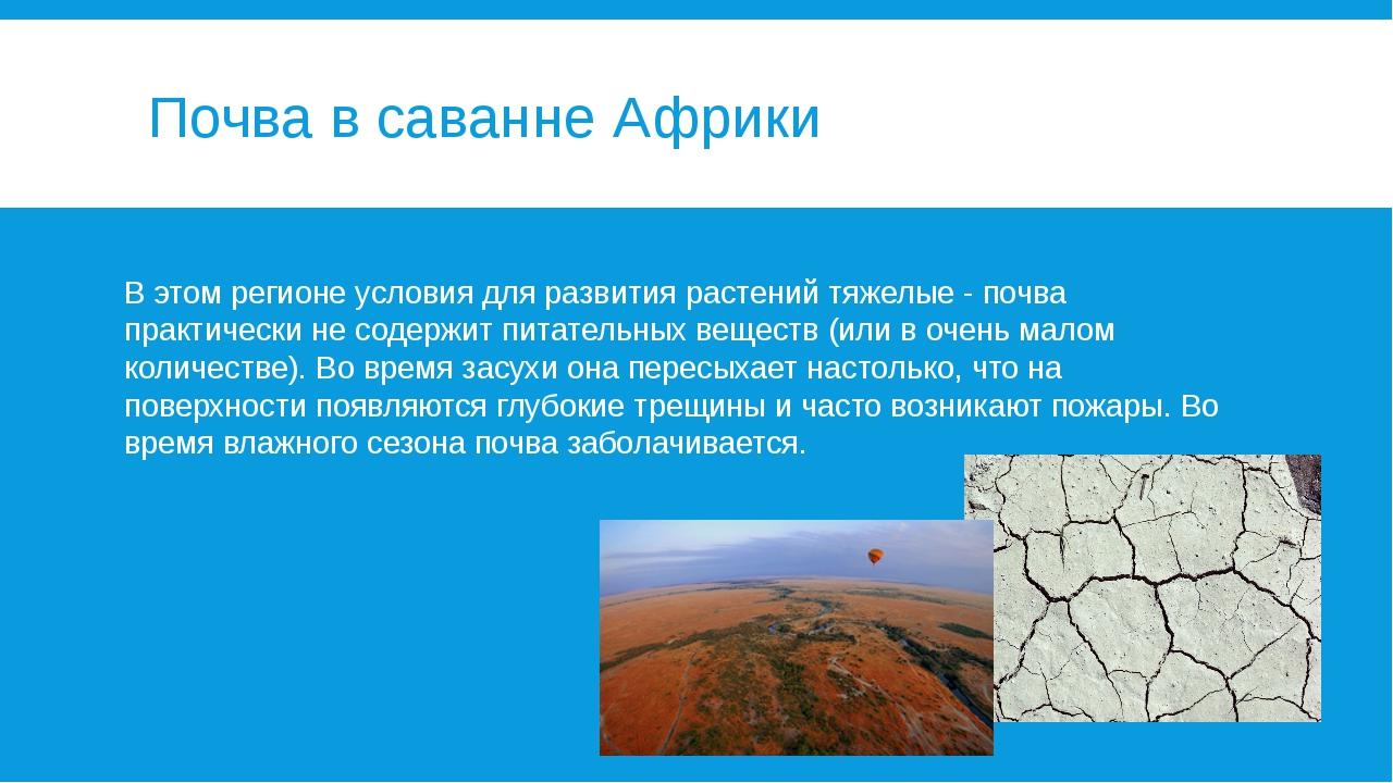 Почва в саванне Африки В этом регионе условия для развития растений тяжелые -...