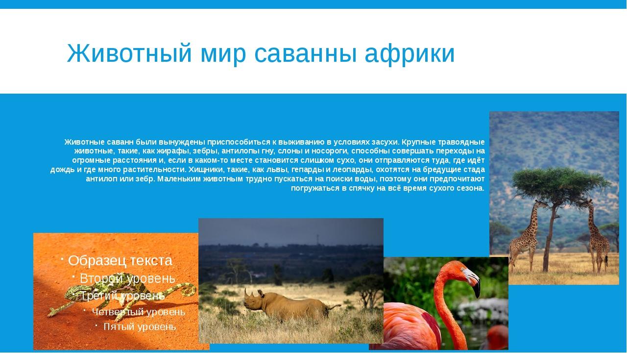 Животный мир саванны африки Животные саванн были вынуждены приспособиться к в...