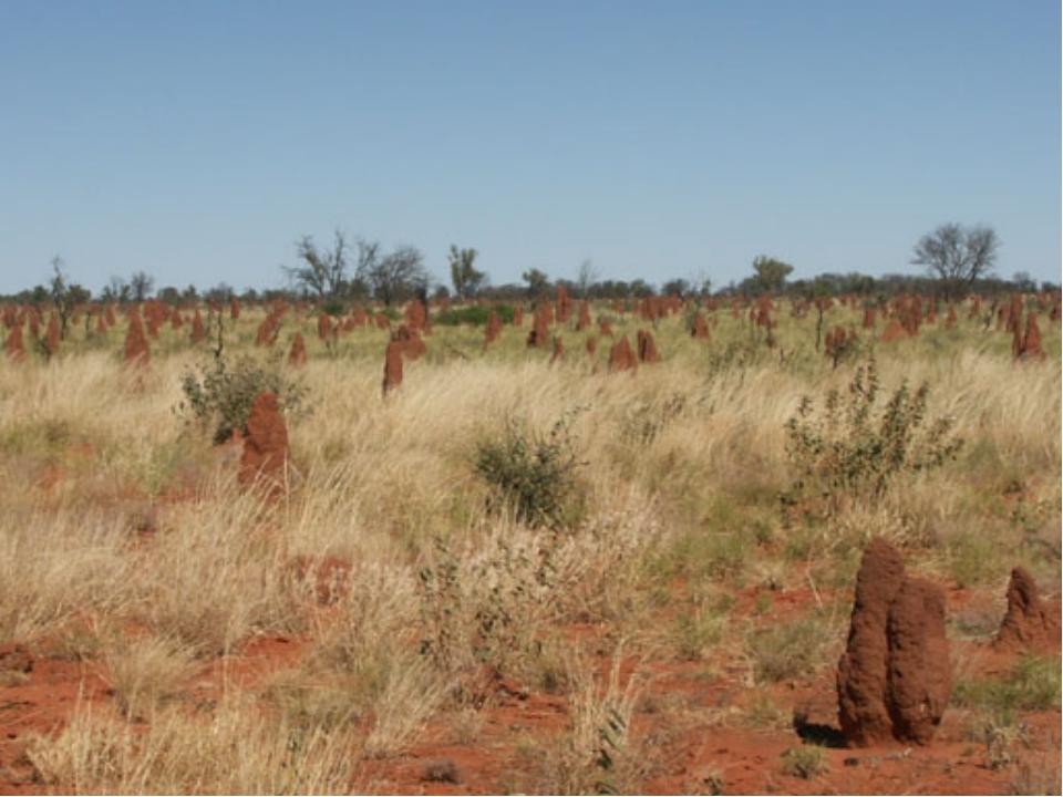 Самый жаркий район Австралии Большая Песчаная пустыня.