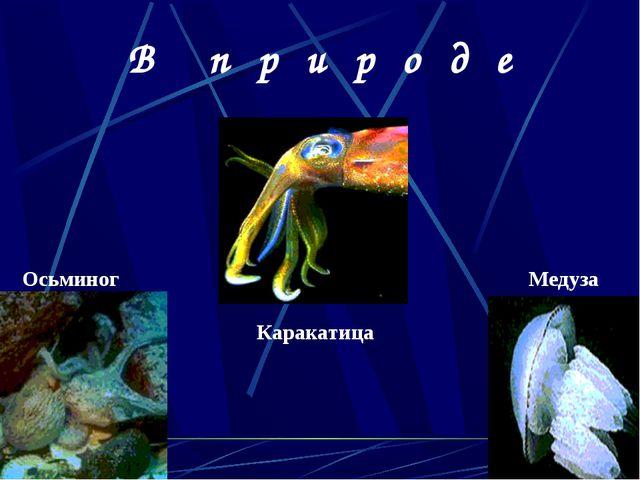 Осьминог Медуза Каракатица В п р и р о д е