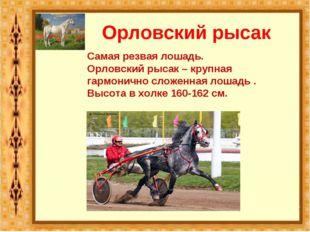 Орловский рысак Самая резвая лошадь. Орловский рысак – крупная гармонично сло