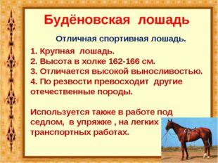 Будёновская лошадь Отличная спортивная лошадь. 1. Крупная лошадь. 2. Высота