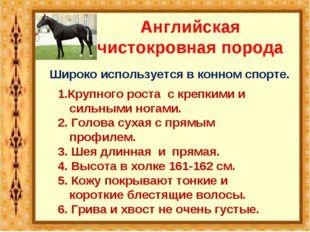Английская чистокровная порода Широко используется в конном спорте. 1.Крупног