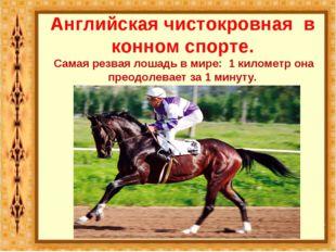 Английская чистокровная в конном спорте. Самая резвая лошадь в мире: 1 киломе