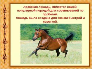 Арабская лошадь является самой популярной породой для соревнований по пробега