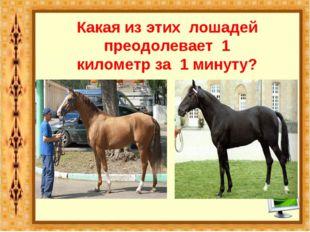 Какая из этих лошадей преодолевает 1 километр за 1 минуту? Английская чистокр