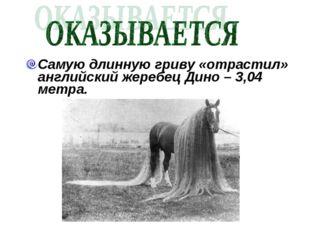 Самую длинную гриву «отрастил» английский жеребец Дино – 3,04 метра.