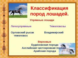 Классификация пород лошадей. Упряжные лошади Легкоупряжные Тяжеловозы Орловск