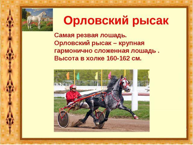 Орловский рысак Самая резвая лошадь. Орловский рысак – крупная гармонично сло...