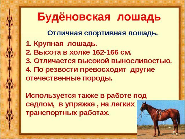 Будёновская лошадь Отличная спортивная лошадь. 1. Крупная лошадь. 2. Высота...