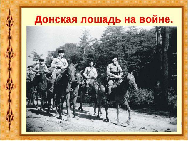 Донская лошадь на войне.