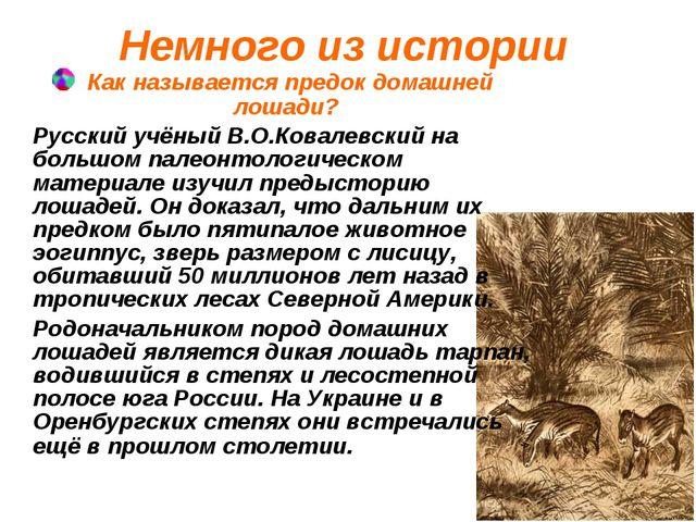 Немного из истории Как называется предок домашней лошади? Русский учёный В.О....