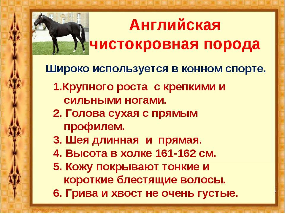 Английская чистокровная порода Широко используется в конном спорте. 1.Крупног...