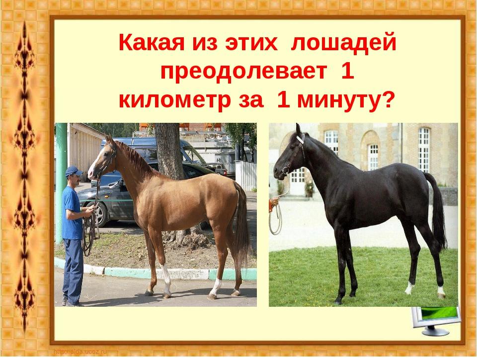 Какая из этих лошадей преодолевает 1 километр за 1 минуту? Английская чистокр...