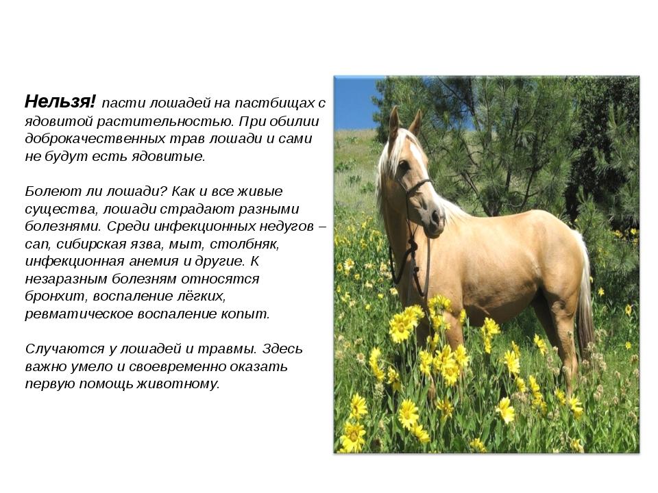 Нельзя! пасти лошадей на пастбищах с ядовитой растительностью. При обилии доб...