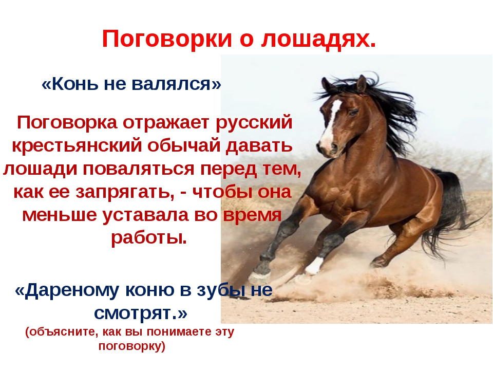 «Конь не валялся» Поговорка отражает русский крестьянский обычай давать лоша...