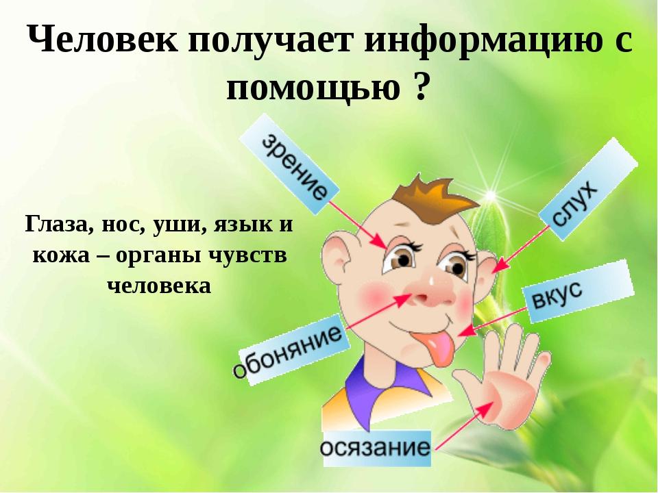 Человек получает информацию с помощью ? Глаза, нос, уши, язык и кожа – органы...