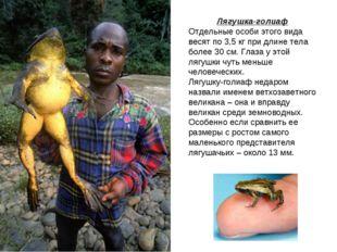 Лягушка-голиаф Отдельные особи этого вида весят по 3,5 кг при длине тела боле