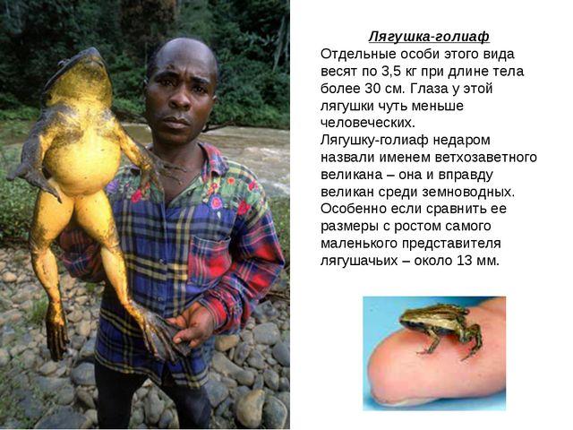 Лягушка-голиаф Отдельные особи этого вида весят по 3,5 кг при длине тела боле...