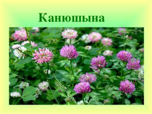 Канюшына