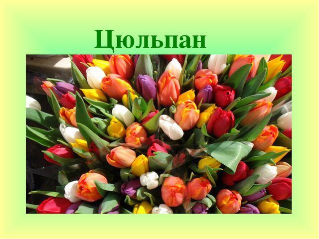 Цюльпан