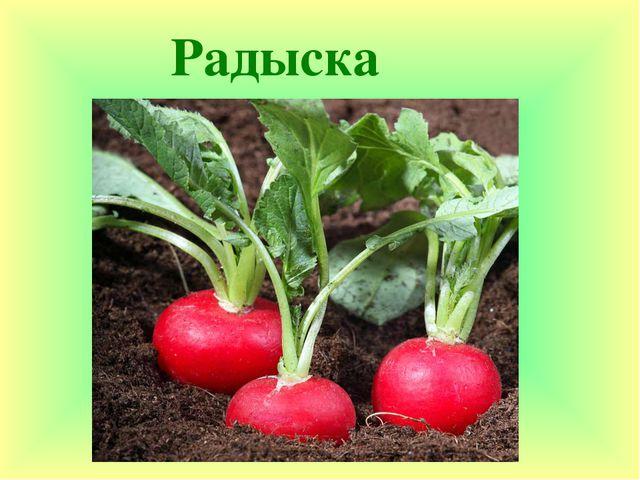 Радыска