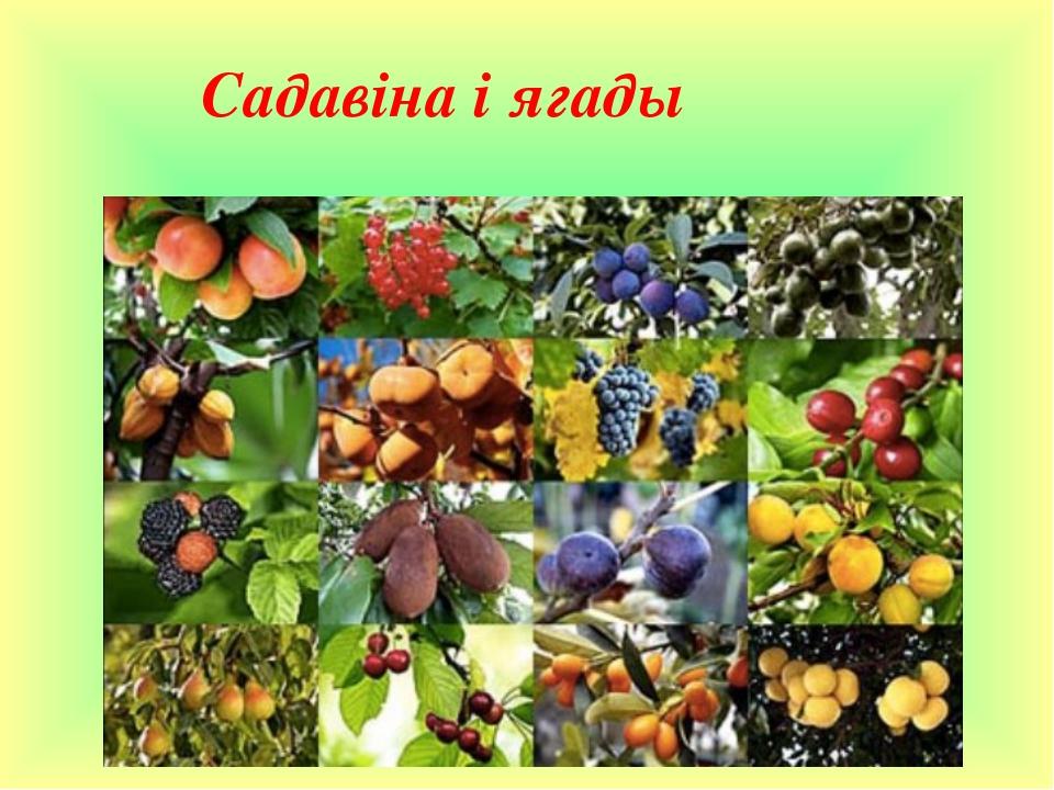 Садавіна і ягады