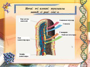 Бер катлы эпителей Кан капиллярлары Лимфа капилляры Аминокислоталар Глюкоза М
