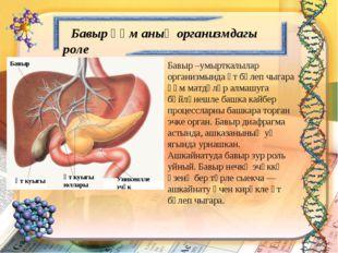 Бавыр һәм аның организмдагы роле Бавыр –умырткалылар организмында үт бүлеп ч