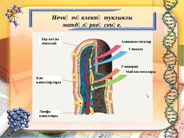 Бер катлы эпителей Кан капиллярлары Лимфа капилляры Аминокислоталар Глюкоза М...