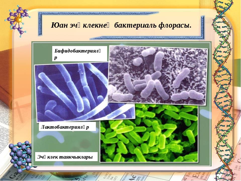 Юан эчәклекнең бактериаль флорасы. Бифидобактерияләр Лактобактерияләр Эчәклек...