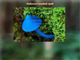 Небесно голубой гриб вида Entoloma hochstetteri обитает в лесах Новой Зеланд