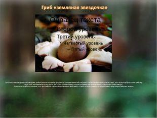 Гриб «земляная звездочка» или звездовик тройной относится к грибам-дождевика