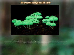 Гриб мицена вида Mycena Chlorophos — это один из 71 видов биолюминесцентных