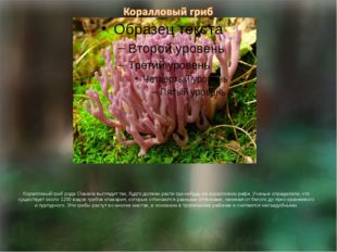 Коралловый гриб рода Clavaria выглядит так, будто должен расти где-нибудь на