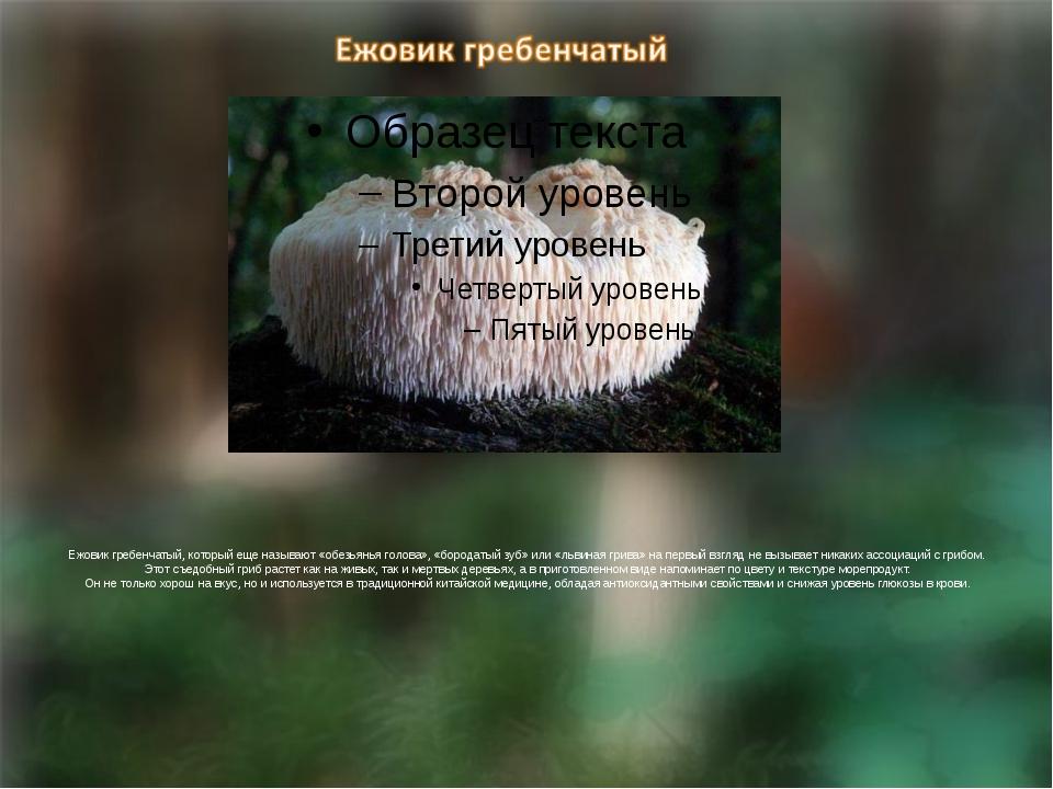 Ежовик гребенчатый, который еще называют «обезьянья голова», «бородатый зуб»...