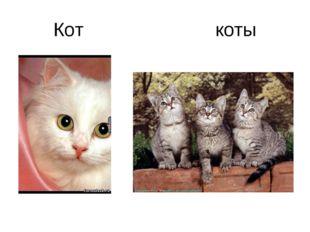 Кот коты