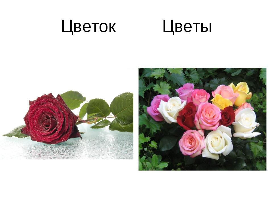 Цветок Цветы