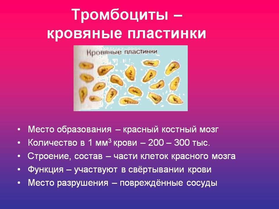 http://osostavekrovi.ru/wp-content/uploads/2015/12/trombociti-1.jpg